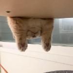 clawcat